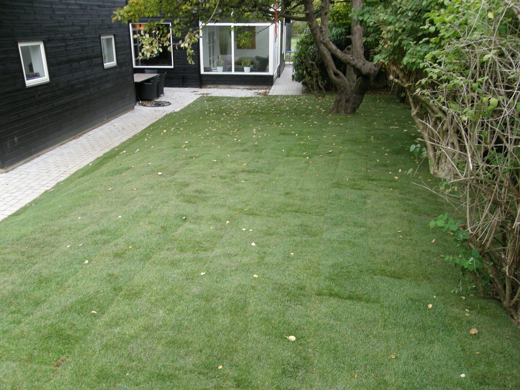 Rullegræs i haven K. Nyholm